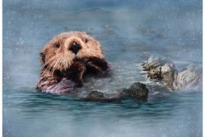 """43"""" x 28"""" Fabric Panel, Call of the Wild, Otter"""