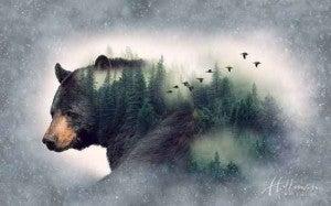 "43"" x 27"" Fabric Panel, Call of the Wild, Bear"