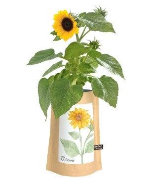 Garden in a Bag Sunflower