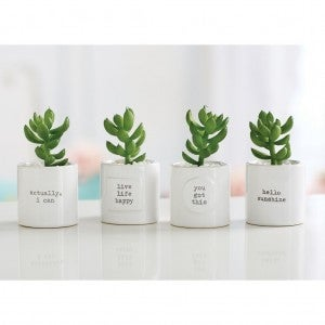 PAZitive Potted Succulents
