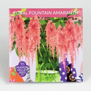 Coral Fountain Amaranth Flower