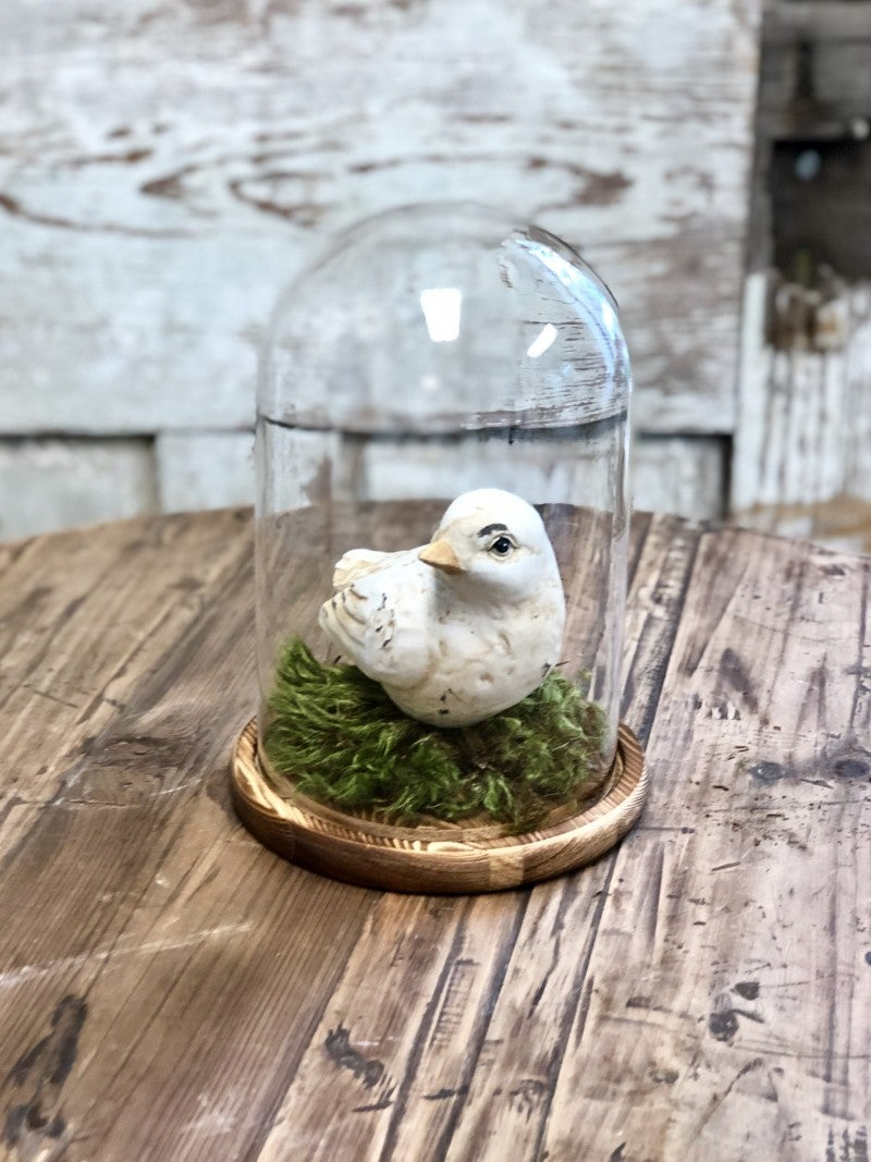 Mini Cottage Cloche'